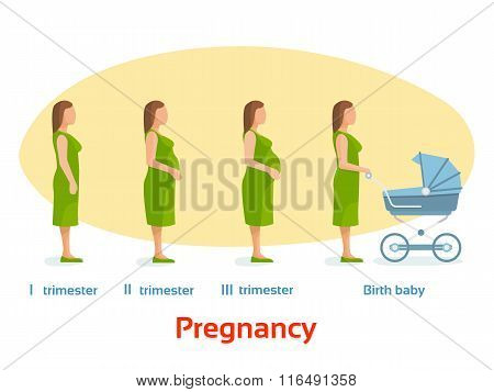 Pregnancy stages, trimesters and birth