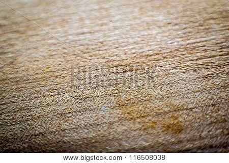 Wood macro backgrownd
