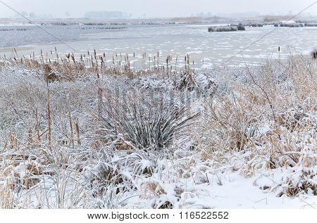 Frozen Swamp In Winter