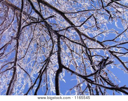 Icybranches