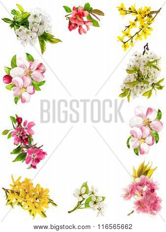 Frame From Blossoms Of Apple Tree, Cherry Twig, Pear, Forsythia