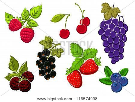 Isolated garden and wild berries fruits