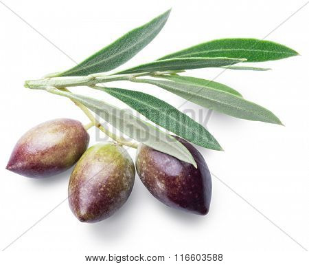 Three olives with leaves. File contains clipping paths.