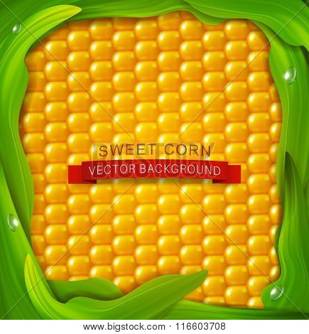 vector background. Yellow corn, green leaves around