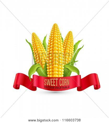 Vector corn. Three ear of corn with leaves and red ribbon. Element for design