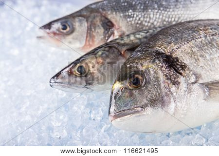 Fresh sea fishes on crushed ice, close-up.