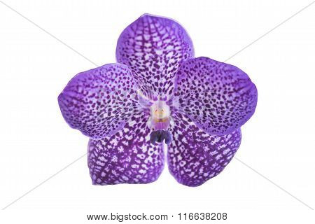 Beautiful purple orchid flower isolated on white.