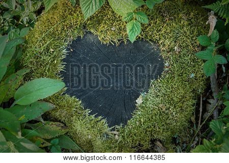 Heart of moss on a stub