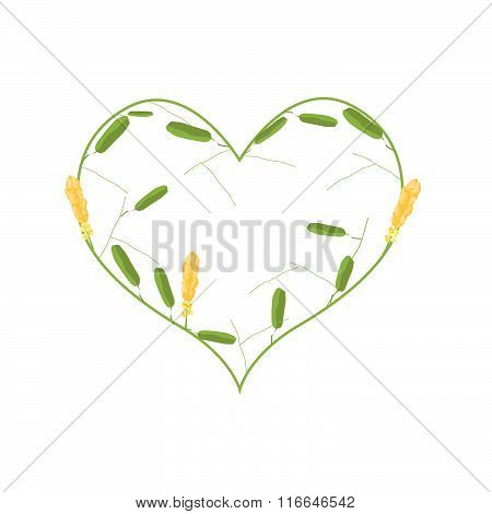 Yellow Ringworm Bush Flowers In A Heart Shape