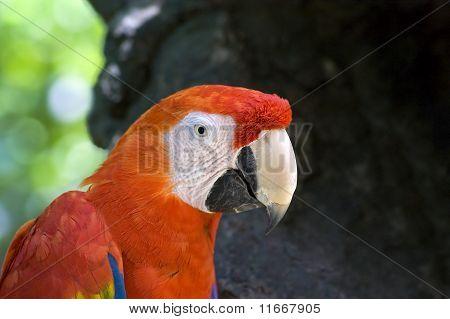 Colorful Parrot Closeup