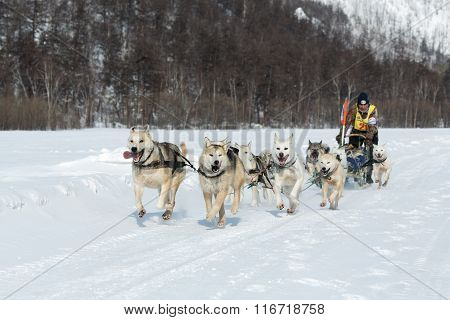 Kamchatka Extreme Dog Sledge Race Beringia. Russian Far East, Kamchatka Peninsula