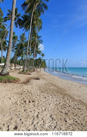 A beautiful and relaxing beach for vacations in Maragogi - Alagoas (AL) Brazil. 125 km north of Maceio capital city.  Maragogi has a typical tropical climate, with  amazing natural pools to know.