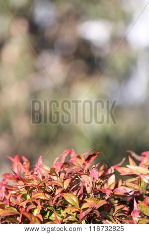 Orange Leaves with soft focus mountain background