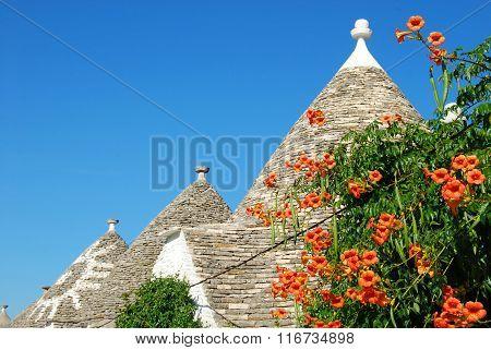 The Trulli Of Alberobello In Apulia - Italy N131