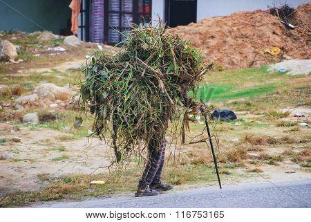 Nepalese Old Man Loading Underbrush