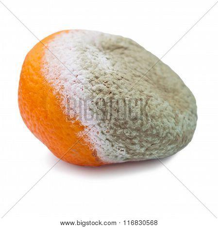 Spoiled Moldy Tangerine