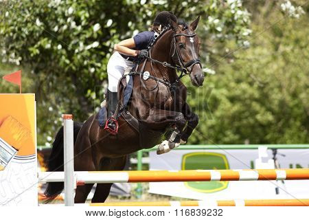horse riding parcours jumping competition. horse jumping obstacle
