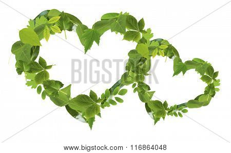 Heart sof different  green  leaves, isolated on white