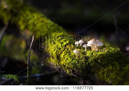 Mushrooms In The Sunlight