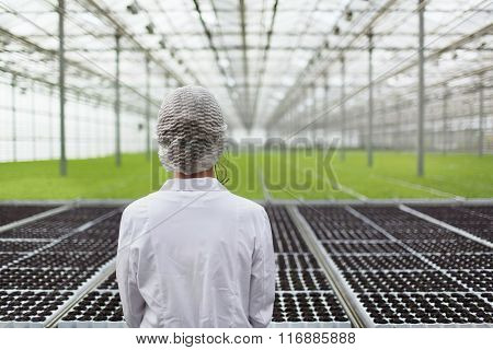 Close-up Back Portrait Biotechnology Woman Engineer Examining A Plants For Disease From Greenhouse F
