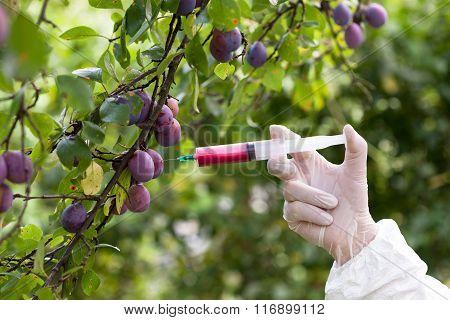 Genetically modified fruit. GMO fruit.