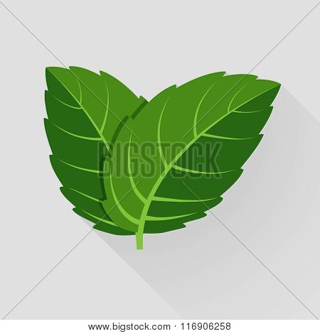Mint vector leaves