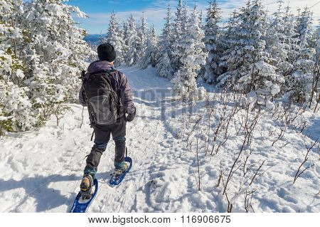 Young Man Snowshoeing In Winter,  In The Quebec Eastern Townships Region, Canada