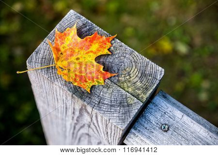 Maple Leaf On Wooden Post