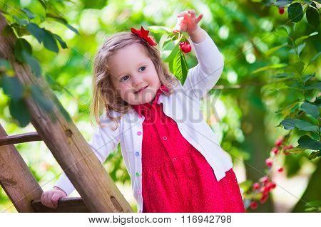 Little Girl Picking Fresh Cherry Berry In The Garden