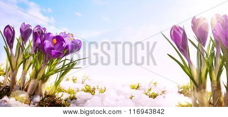Art Spring Flower  Background