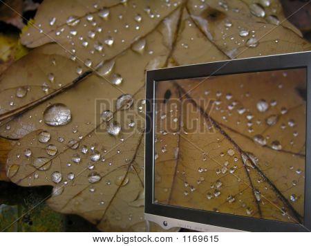 Leaf And Monitor