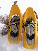 bird on snow shoes poster