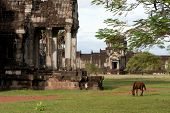 Angkor Wat with a horse in front. poster