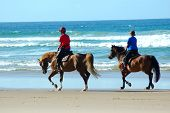 two brown horses with riders walking in the water on the beach poster