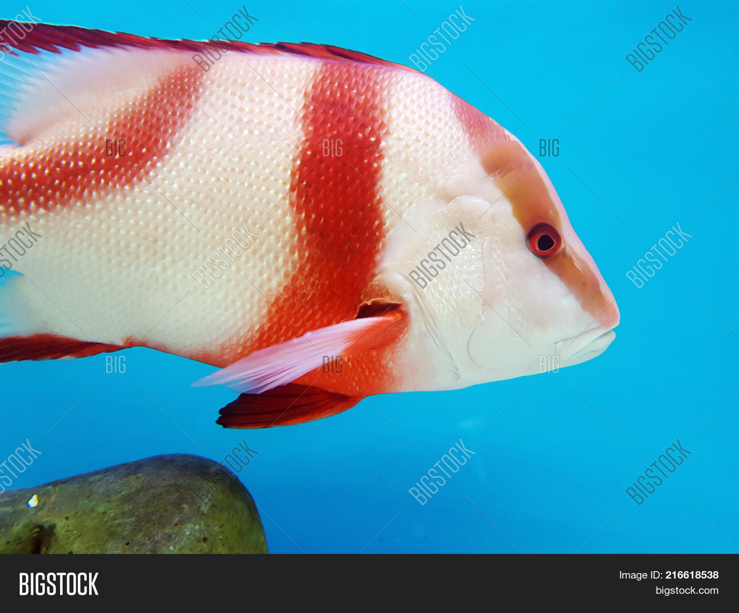 Colorful Fish Aquarium Image & Photo (Free Trial) | Bigstock