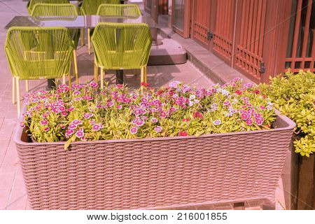 jumbo flower pot with outdoor table and green chairs