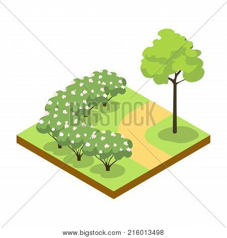 Park alley with bushes and tree isometric 3D icon. Decorative plant and green grass vector illustration. Nature map element for summer parkland landscape design.
