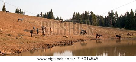Herd of wild horses at waterhole in the Pryor Mountains Wild Horse Range in Montana United States