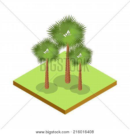 Palm tree isometric 3D icon. Public park plant and green grass vector illustration. Nature map element for summer parkland landscape design.