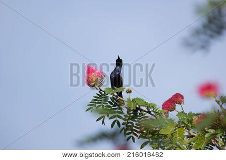 Small Bord On Pink Flower Powder Puff Or Head Powder Puff