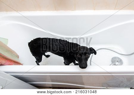 Cute Dog Standing In Bathtub Waiting To Be Washed