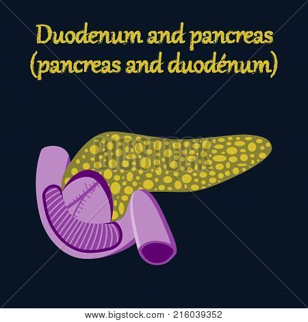 human organ icon in flat style duodenum and pancreas
