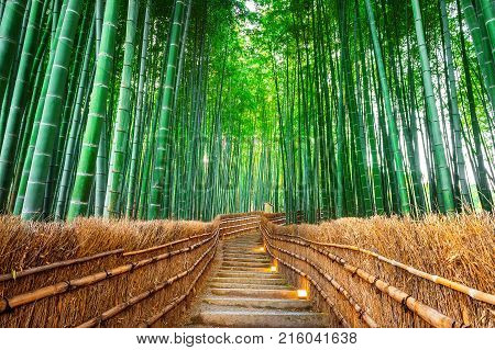 Beautiful of Bamboo Forest in Kyoto Japan.