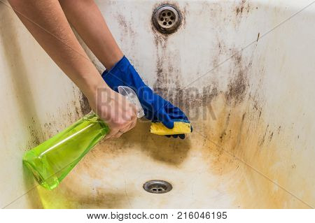 Cleaning dirty old bathtub with corrosion and mould with detersive. Hands in blue rubber worker handgloves hold sponge and spray with detergent clean bath tub covered in fungus dirt and mold