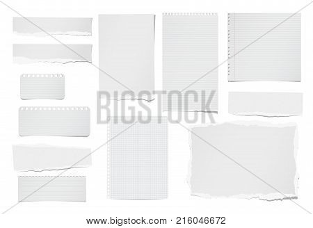 Torn ruled and blank note, notebook, paper strips, sheets for text or message stuck on white background