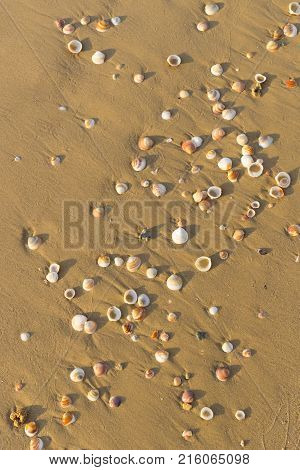 Background of a sandy beach with sea shells