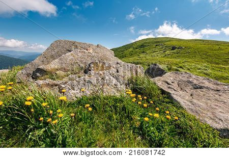 Yellow Dandelions On A Grassy Hillside