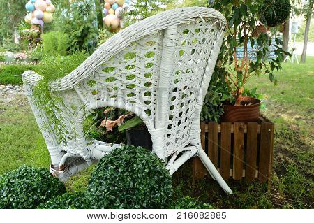White Wicker Chair In The Garden, Plants In Pots Stand On The Chair. Beautiful Design