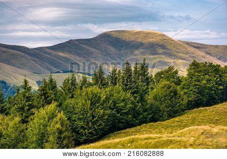 Forested Hillside Of Svydovets Mountain Ridge