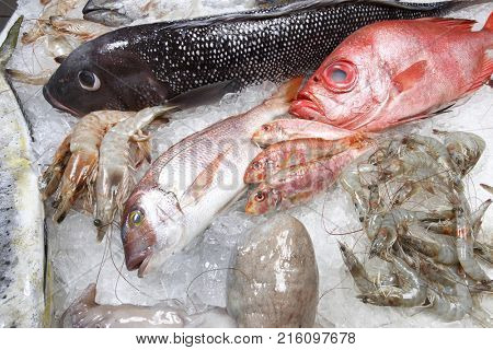 Fish, seafood and crustaceans